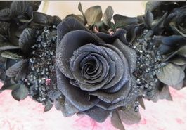 blackrose2