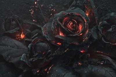 ash-rose