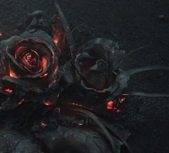 ash-rose3