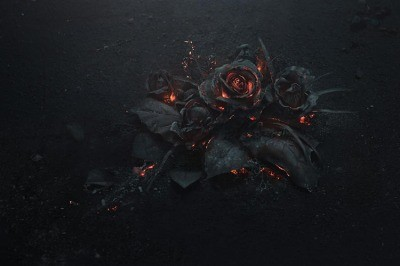 ash-rose4