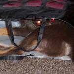 地獄の番犬「ケルベロス」に似た姉宅の犬が怖い・・・!