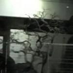 ゴシックシルエットな木を発見★死神とか傍に立ってそう