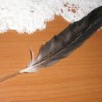 ゴスな羽ペンを作りたい!⇒水辺で拾った鳥の羽根を消毒し・・・